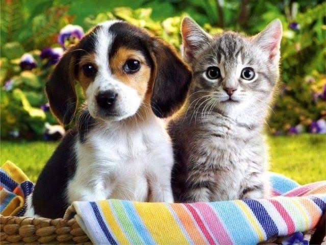 Dog and Cat Training