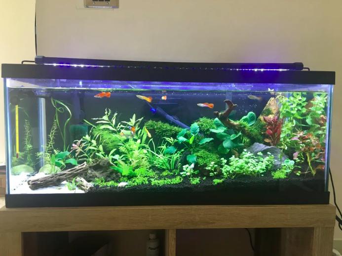 Betta Fish - Perfect Aquarium Set-Up For A Betta Fish