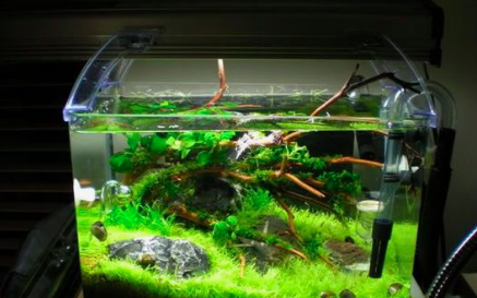 Betta Fish - Beginners Guide To A Betta Set-Up