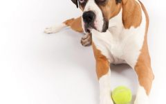 Things to get when getting a Boxer