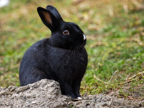 Photo from https://www.google.com/url?sa=i&url=https%3A%2F%2Fwww.calacademy.org%2Feducators%2Flesson-plans%2Fbreeding-bunnies&psig=AOvVaw2EMtmAJHVCnD7raPKBtsbA&ust=1629822975768000&source=images&cd=vfe&ved=0CAsQjRxqFwoTCJDJ0-_Jx_ICFQAAAAAdAAAAABAJ